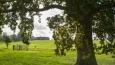 Hampshire_20141201_0964.jpg